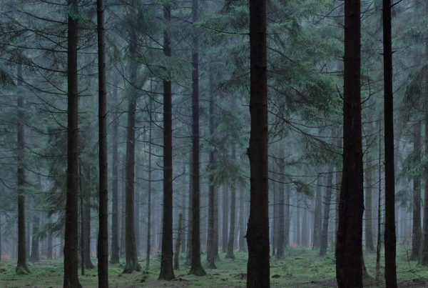 forest in Germany